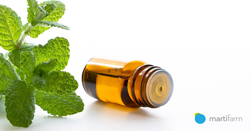 Aromaterapija – eteričnim uljima do poboljšanja zdravlja