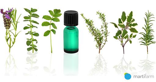 Značaj biljaka u farmaceutskoj industriji